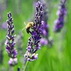 SWISS KRONO setzt sich für das Wohlergehen der Wildbienen ein