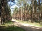KRONOPLY verwendet ausschließlich Durchforstungsholz aus ökologisch bewirtschafteten Wäldern.