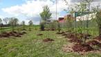 Gepflanzte Sträucher für die Wildbienen am Rande des SWISS KRONO Firmengeländes